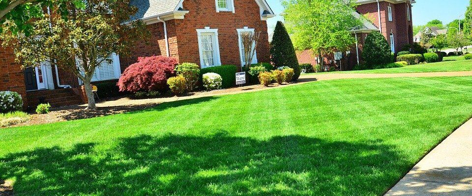 A Guide to Caring for Your Lawn